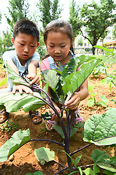 June 16, 2017 - Weifan, Weifan, China - Weifang, CHINA-June 16 2017: (EDITORIAL USE ONLY. CHINA OUT) Pupils experience farming work at a mini farm in Weifang, east China's Shandong Province, June 16th,2017. (Credit Image: © SIPA Asia via ZUMA Wire)