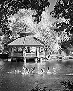 This is an open edition print. Canvas prints have a 2 inch black border so it can be gallery wrapped. The print is made using pigmented inks on museum-grade canvas or watercolor paper. Each print also gets a light coating of lacquer protective spray. Each print is hand signed by Brian DeWolf.     Geese take wing at the gazebo on the Fox River.
