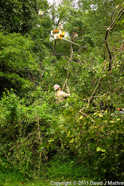PSE&G Worker Working to Free the the Downed Power Line from Trees and Vines. Hurricane Irene. Image taken with a Leica X1 camera.