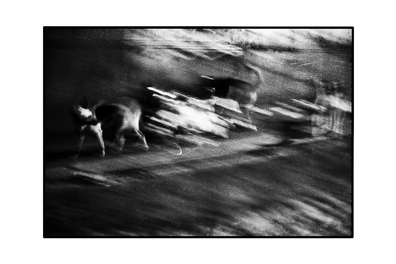 LOS PERROS - 1/6<br /> BLACKPARAISO 2001<br /> neg/inkjet<br /> 30x40<br /> canson Baryta Photographique 310gsm