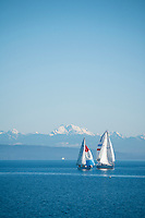 Sailboats in the Hood Canal, Washington.