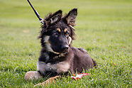 German Shepherd Rescue UK Show