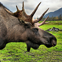 Big Animals - One