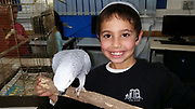 Elementary School child interacting with animals as part of a school project