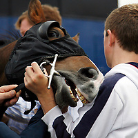 Maniac was losing patience at the strand racing in Kilkee on Sunday.<br /><br /><br /><br />Photograph by Yvonne Vaughan.