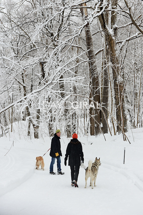 Couple walking their dog in a Snow covered Mont Royal Park in Winter, Parc du Mont Royal, Montreal, Quebec, Canada