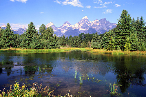 Teton Mountains reflected in Snake River; majestic, evergreens, Grand Teton National Park