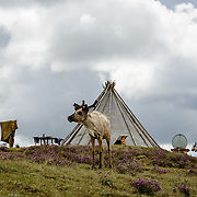 Ortz or teepee with reindeer, a satellite dish, solar panel and a clothes line. Approximately 200 families comprise the Tsaatan or Dukha community in northwestern Mongolia, whose existence is intimately linked to their herds of reindeer. Photo © Robert van Sluis