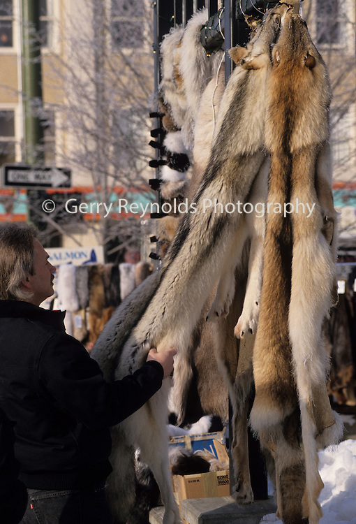 Fur Rendezvous, Fur rondy, rondy, Man, Wolf Pelt, wolf fur, fur, Anchorage, Alaska