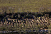 Nederland, Betuwe, Gemeente Culemborg, 07-03-2010; Beesd, Lage Veld; wilgentnen (?), rijshout.luchtfoto (toeslag), aerial photo (additional fee required).foto/photo Siebe Swart