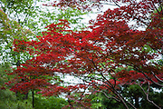 Kyoto garden (Japan)