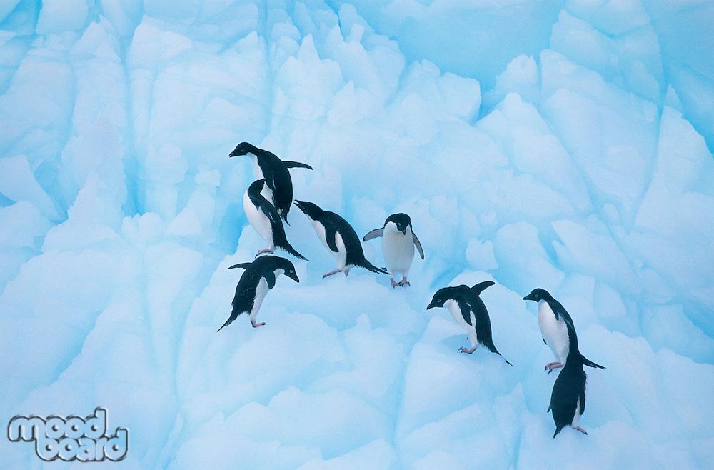 Penguins climbing on ice