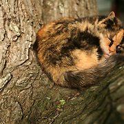Pittsboro, NC - May 12: Cat in the tree at the farm at Circle Acres. (Photo by Logan Mock-Bunting)