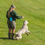 The Greater Milwaukee Poodle Club (GMPC) held their 2017 WC & WCX, August 20, 2017.  The event took place at Wern Valley Sportsmens Club, in Waukesha, WI. Photography was made August 20, 2017.  The weather was beautiful.  A perfect late summer day for working dogs!