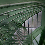 Interior of the Tropical Rainforest Glasshouse (formerly Le Jardin d'Hiver or Winter Gardens), 1936, René Berger, Jardin des Plantes, Museum National d'Histoire Naturelle, Paris, France. Detail showing the metal structure of the roof of the Art Deco style glasshouse with luxuriant tropical foliage fringing the corner of the picture.