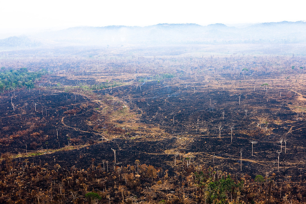 Amazon rainforest is cleared in the Trairao Municipality of Para State, Brazil, Aug. 11, 2008..Daniel Beltra/Greenpeace