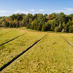 Drone view of the woods and salt marsh at the Wildlands Trust's Cushman Preserve in Duxbury, Massachusetts.