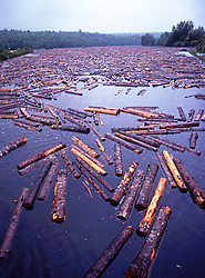 Logs Soaking, Paper Mill