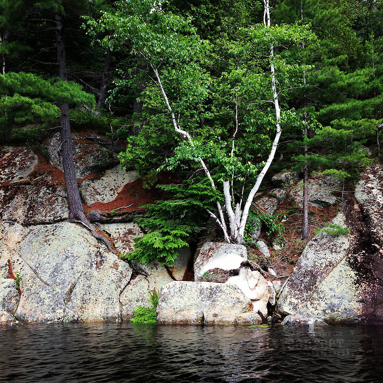 A variety of trees and rocks form the edge of Tupper Lake in Adirondack Park near the town of Tupper Lake, New York.  Photo by Gary Cosby Jr.