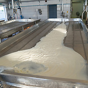 milk for making Parmigiano Reggiano