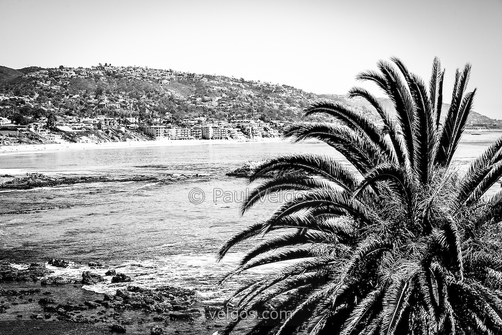Laguna beach california black and white picture photo has a palm tree in the forground