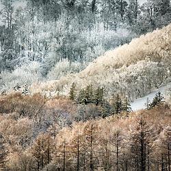 NISEKO WINTER FOREST VIEWS