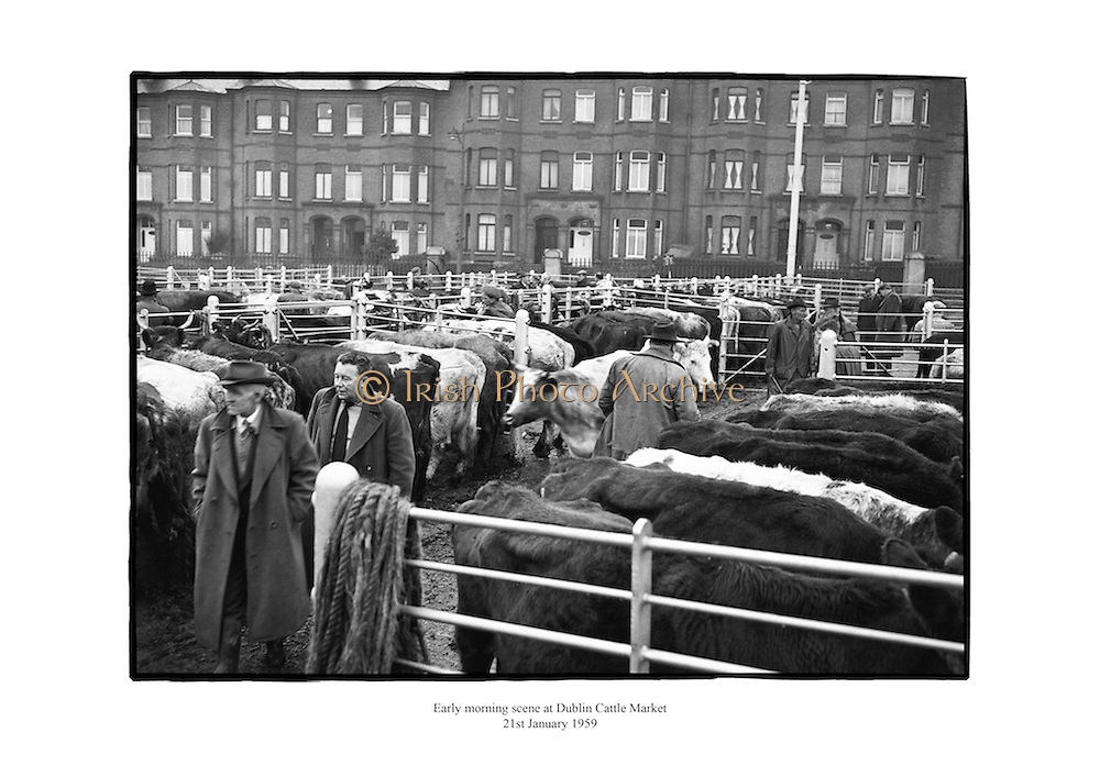 Early morning scene at Dublin Cattle Market.<br />