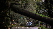 damage left by Hurricane Matthew as it made its way up the East Coast, Saturday, Oct. 8, 2016, in Savannah, Ga. (AP Photo/Stephen B. Morton)