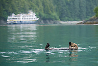 Sea Otter and the National Geographic Sea Bird at the Inian Islands in Southeast Alaska.