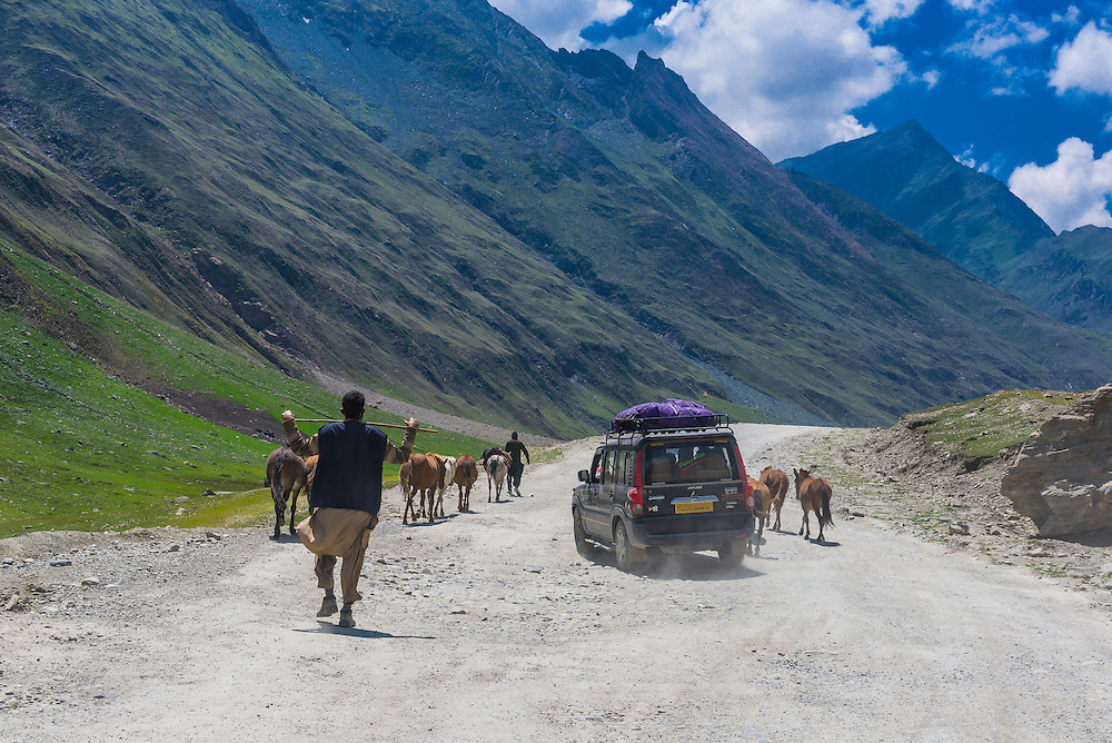 Herding horses towards Kashmir from Ladakh, Jammu and Kashmir State, India.
