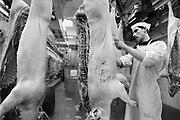 Nederland, Nijmegen, 2-5-1988<br /> Het slachthuis van de firma Hilckmann aan de Waalhaven. Hier worden varkens geslacht.<br /> FOTO: FLIP FRANSSEN/ HH