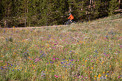 Abiker peddles past a field of wildflowers in Breckenridge, Colorado, during the summer months.