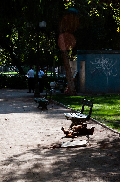 Santiago, Chile 2010<br /> <br /> A stray dog taking a nap in Parque Forestal two weeks after the 7.7 earthquake that struck just outside the capital of Santiago.