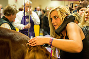 New York, NY - 16 February 2016. A woman with a hair dryer tucked against her shoulder grooms an Irish setter prior to the evening competition at the 140th Westminster Kennel Club Dog show in Madison Square Garden.