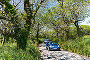 Driving blue Mini convertible saloon car along country lane at Hartland  in North Devon, Southern England, UK