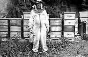 Beekeeping, Berlin, urban Beekeeping, Bees, Bee