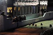 160513 Greyhound racing Ystrad Mynach