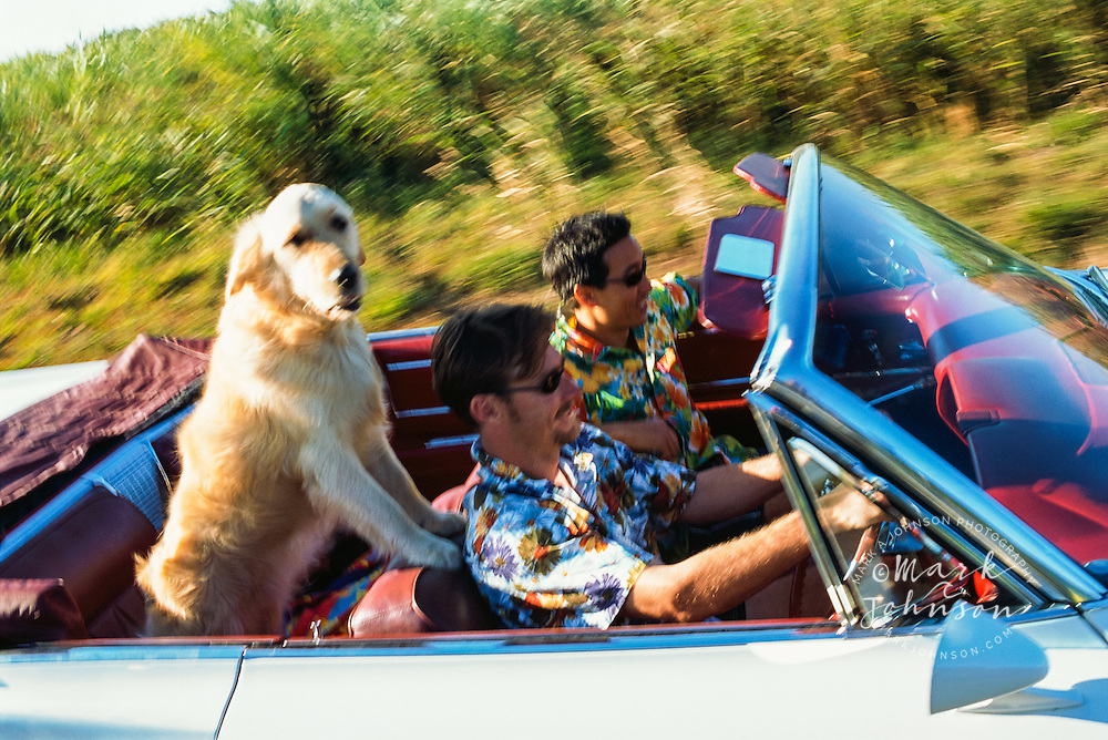 Friends Riding with Dog in Convertible