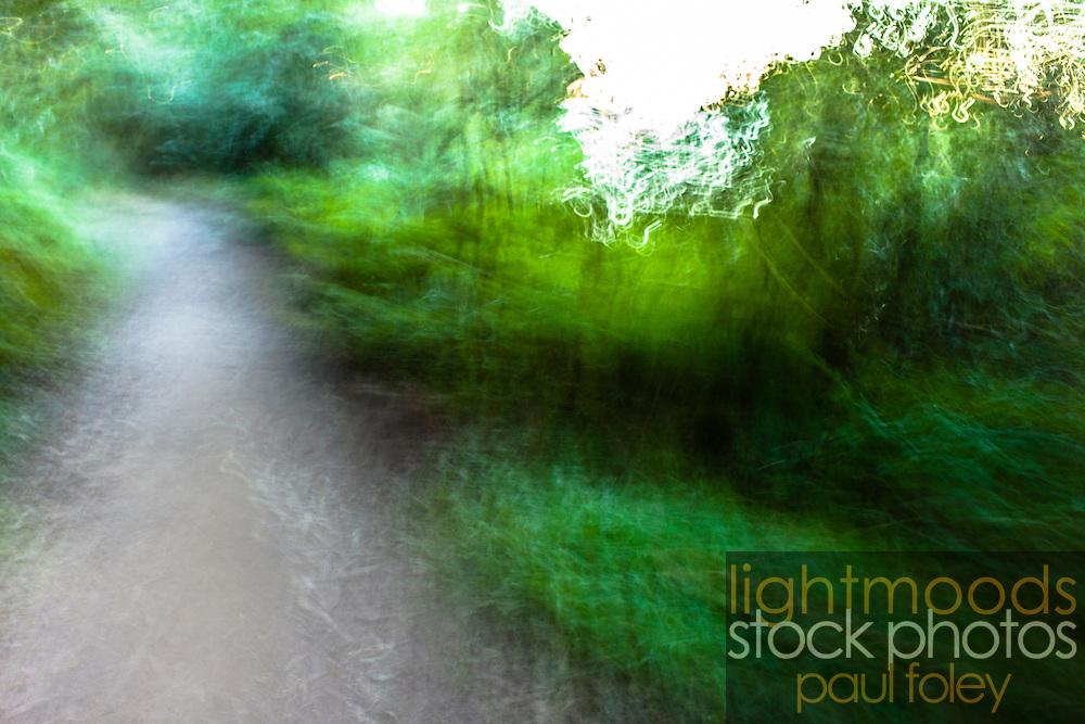 Walking along a bush path with blurred vision. Sydney, Australia.
