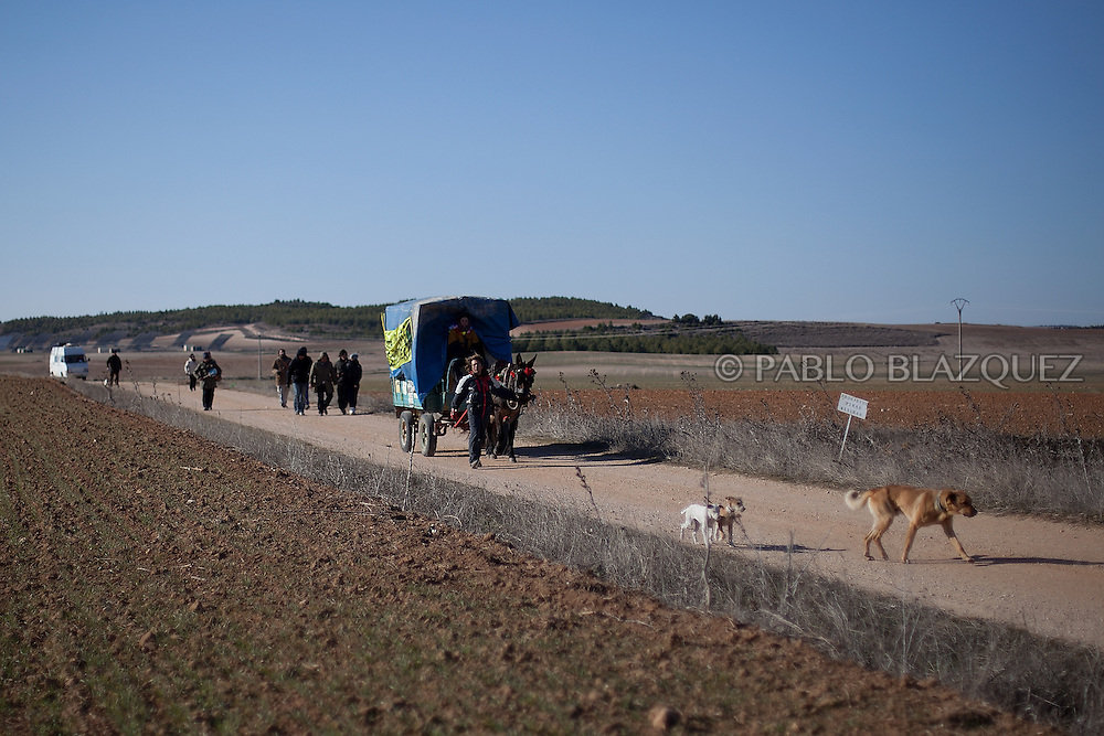 Dogs walk ahead of people arriving at Villar de Cañas, near Cuenca , on February 12, 2012, for a demonstration organized by environmentalists against the possible construction of a nuclear waste storage.