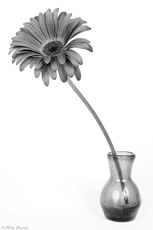 Flora in Gray<br /> Keep it Simple Floral in Grey