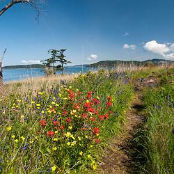 Wildflowers of Yellow Island, San Juan Islands, Washington, US