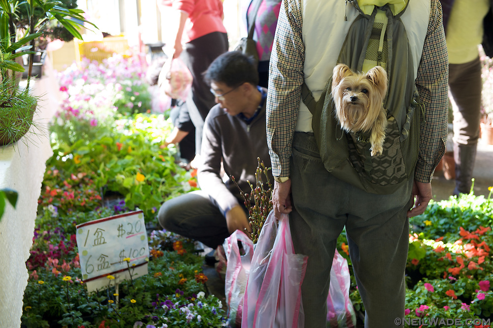 Even dogs like shopping at the Taipei Flower Market.