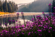 Violet flowers at splendid summer mornig by a calm mountain lake