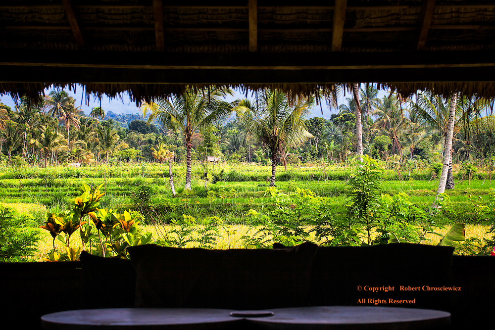 Morning View: The morning view from the circular, 360 degree Motel Restaurant, gives a typical tropical scene of swaying palm trees scattered amongst the rice fields, in Tetebatu - Lombok Indonesia.
