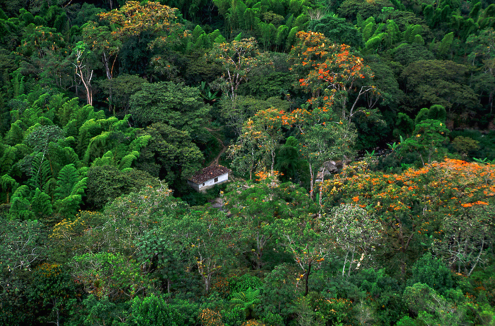 Forest Canopy, Colombia --- Image by © Jeremy Horner/CORBIS