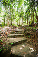 Path through forest; Koh Pha Ngan; Thailand