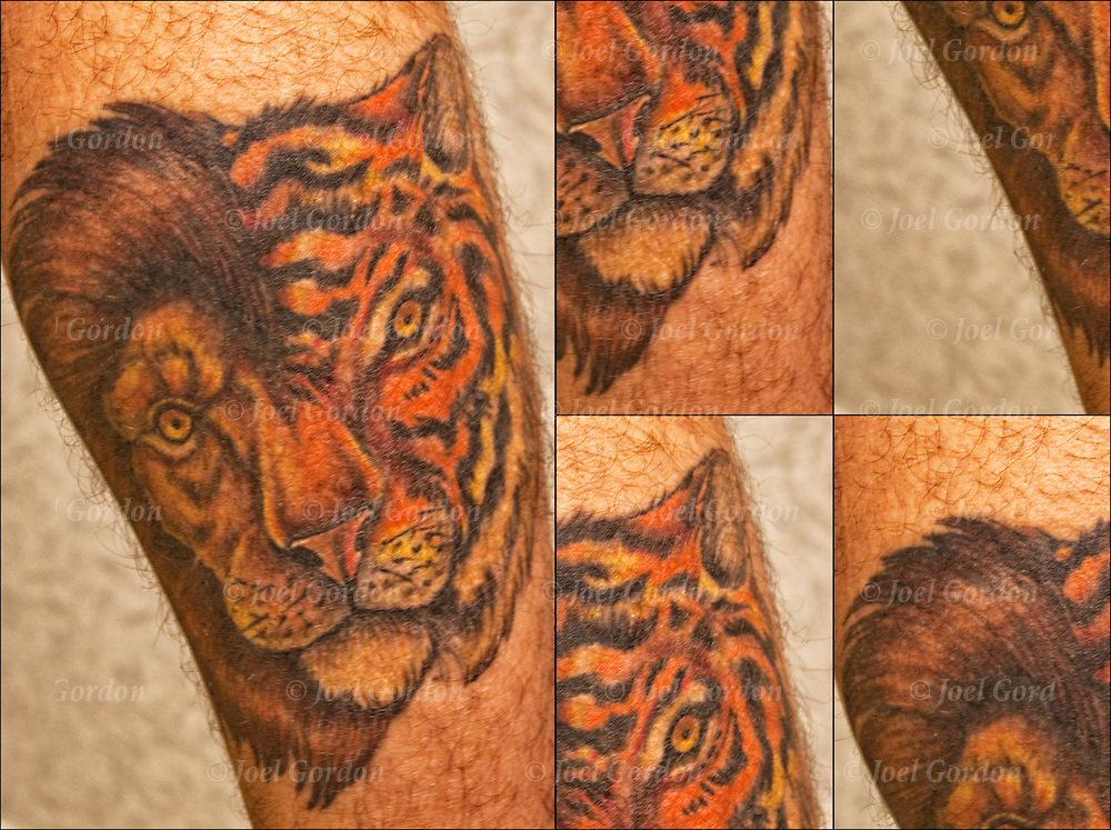 Collage of Tory's Lion Tiger tattoo on his leg.<br />
