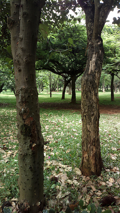 Cubbon Park, Bangalore. It is a landmark 'lung' area of the Bangalore city, located  within the heart of city in the Central Administrative Area. Originally created in 1870, when Major General Richard Sankey was the then British Chief Engineer of Mysore state, it covered an area of 100 acres (0.40 km2) and subsequent expansion has taken place and the area reported now is about 300 acres