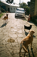 Dogs in a village on the Camino de Santiago, October, 2016.
